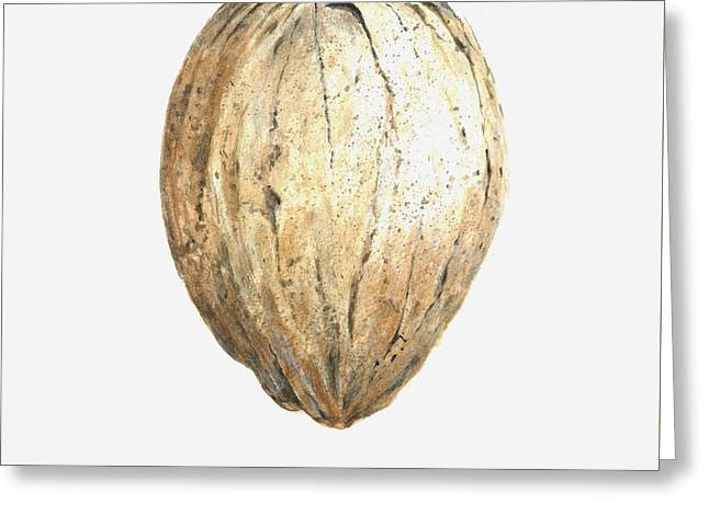 Coconut Greeting Card by Lincoln Seligman