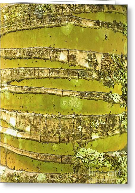 Coconut Palm Bark 1 Greeting Card by Brandon Tabiolo - Printscapes