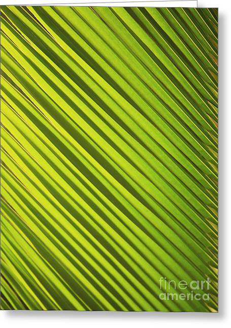 Coconut Palm Greeting Card by Brandon Tabiolo - Printscapes