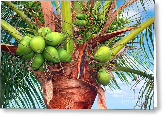 Coconut Palm Treasure Coast Florida C1 Greeting Card