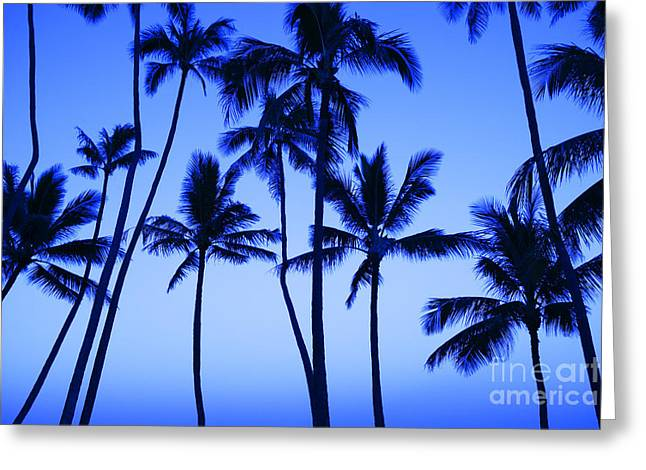 Coconut Palms At Dawn Greeting Card by Dana Edmunds - Printscapes