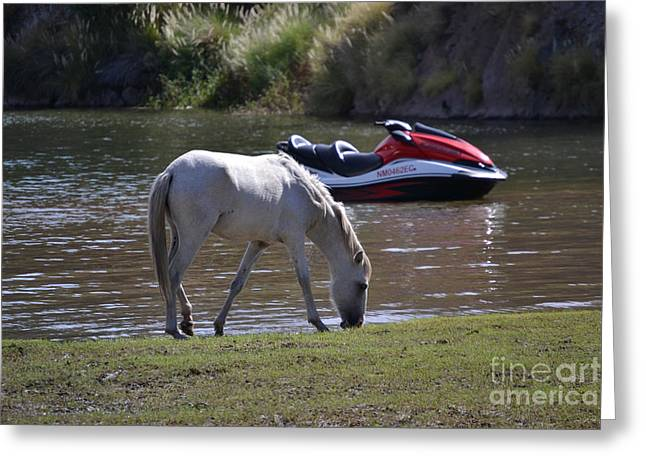Coexistence Salt River Wild Horses Tonto National Forest Number Two Jet Ski Greeting Card