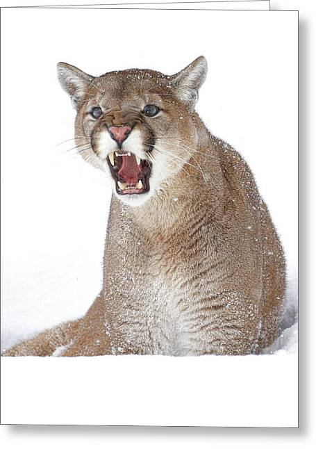 Cold Anger Greeting Card