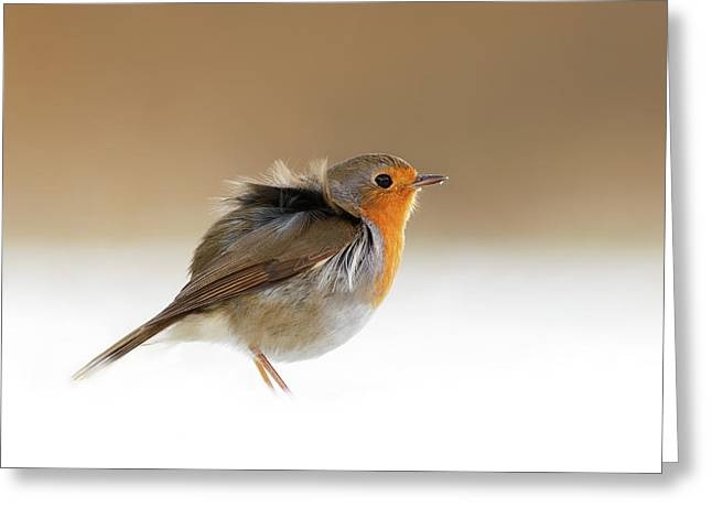 Cold Feet II - Little Red Robin In The Snow Greeting Card
