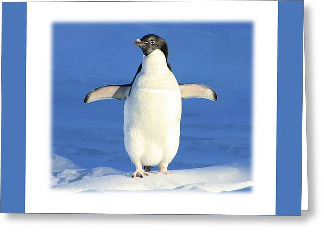 Cold Feet - Penquin In The Snow Greeting Card