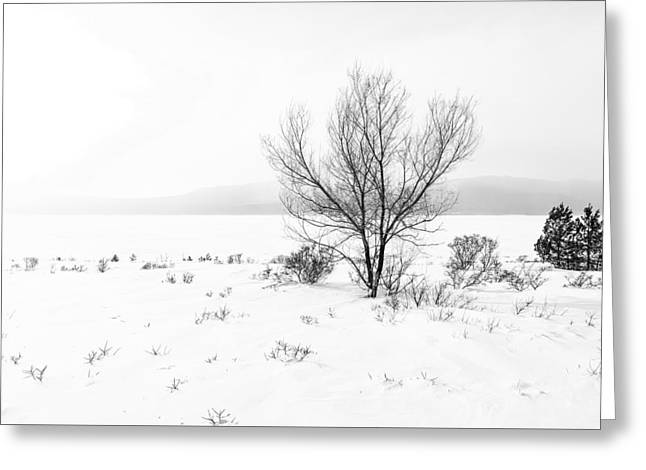 Greeting Card featuring the photograph Cold Loneliness by Hayato Matsumoto