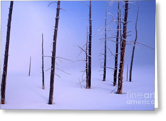 Greeting Card featuring the photograph Cold Morning by Edward R Wisell