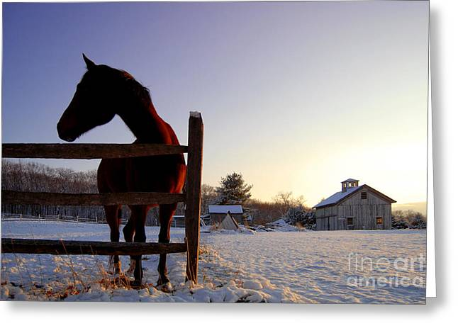 Cold Morning Greeting Card by Sabine Jacobs