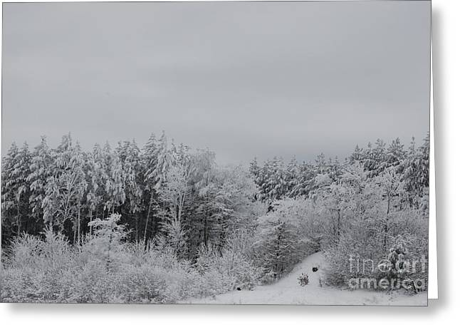 Cold Mountain Greeting Card by Randy Bodkins