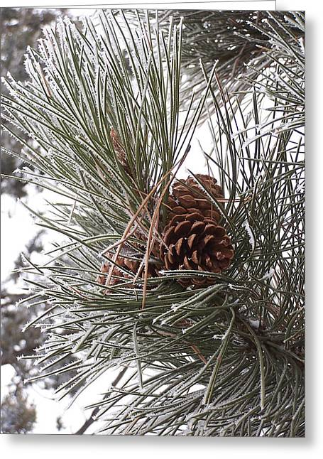 Cold Pine Greeting Card
