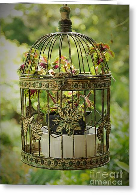 Coleus In Vintage Birdcage Greeting Card