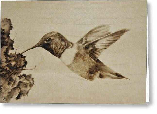 Woodburnings Pyrography Greeting Cards - Colibri Greeting Card by Ilaria Andreucci