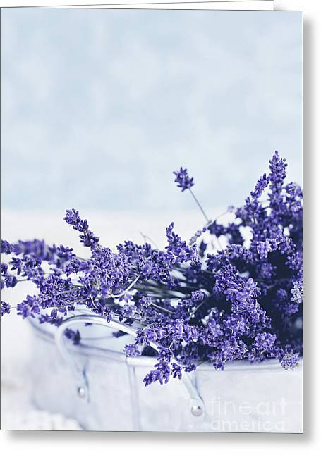 Collection Of Lavender  Greeting Card by Stephanie Frey