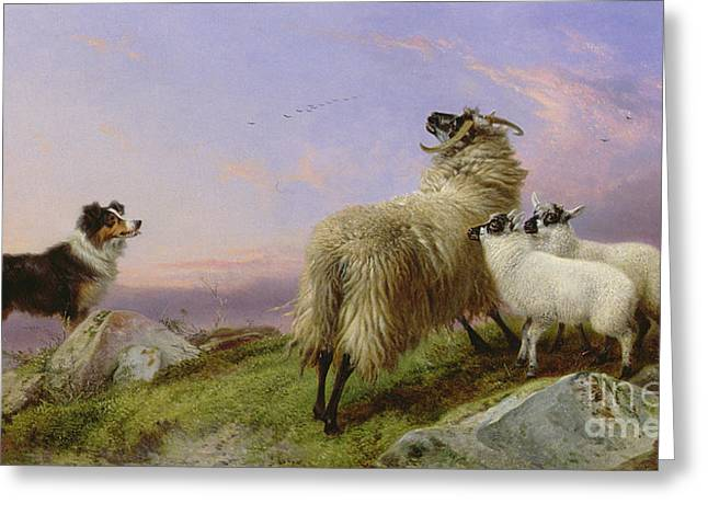 Collie, Ewe And Lambs Greeting Card by Richard Ansdell