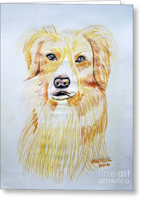 Collie Mix Dog Sketched Art Greeting Card