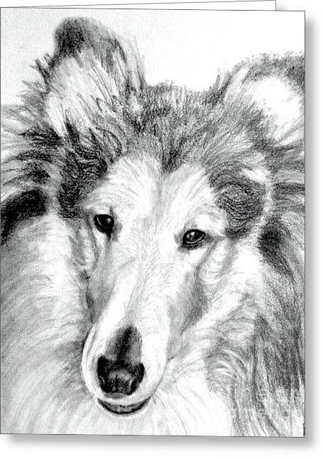 Collie Rough Lover Greeting Card by Susan A Becker