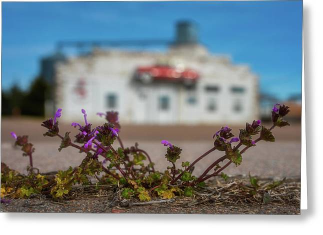 Collyer Sidewalk Blooms Greeting Card by Darren White