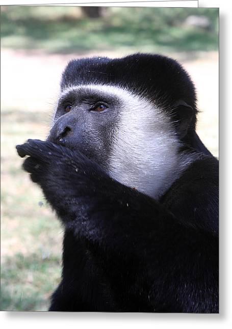 Colobus Monkey Greeting Card by Aidan Moran