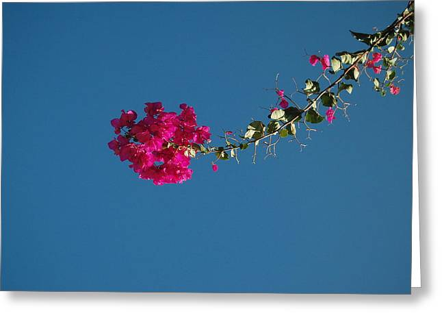 Color And Sky Greeting Card by Jean Booth