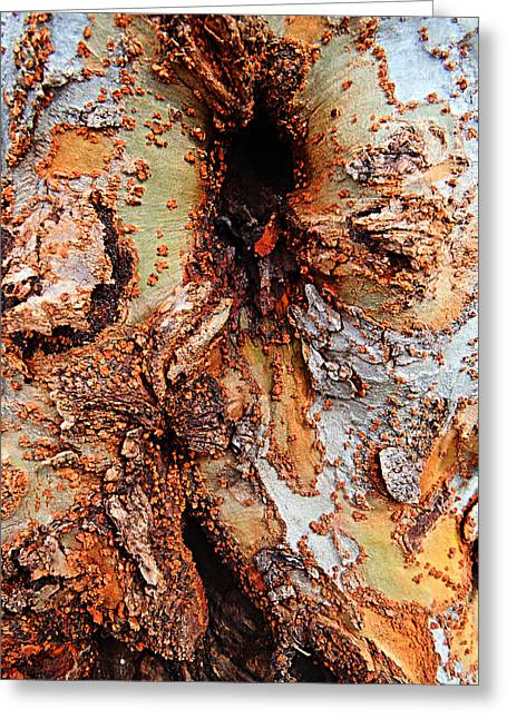 Color And Texture Greeting Card by William Jones
