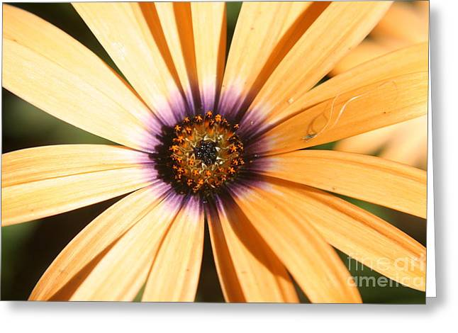 Color Burst Greeting Card by Amy Holmes