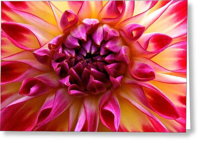 Color Burst Dahlia  Greeting Card