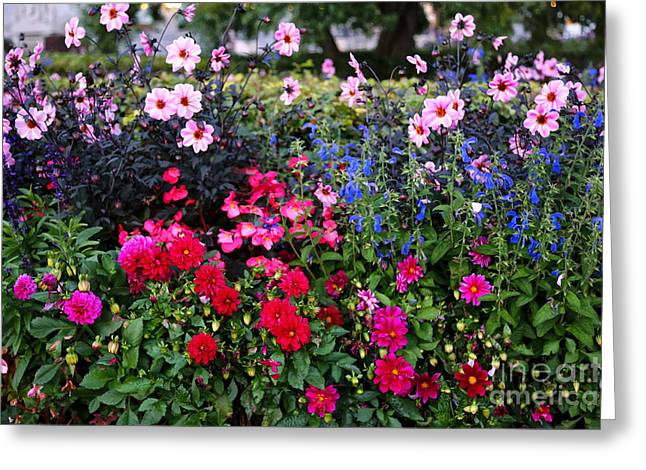 Color Burst Garden In Oslo Greeting Card