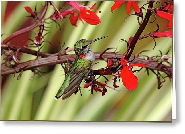 Color Coordinated Hummer Greeting Card by Debbie Oppermann