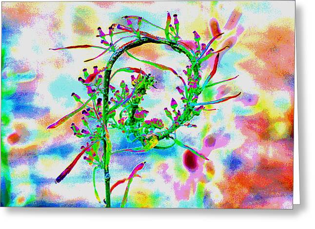 Color Curl Greeting Card