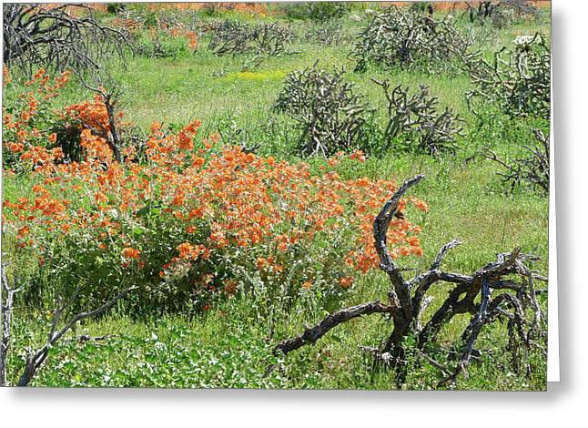 Color In The Desert Greeting Card