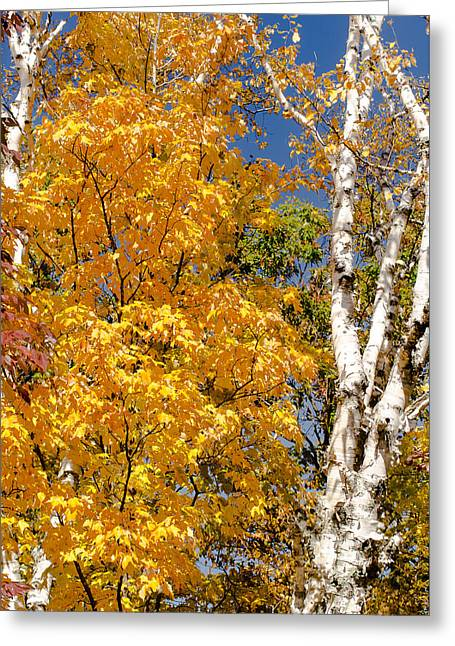 Color In The Trees Greeting Card