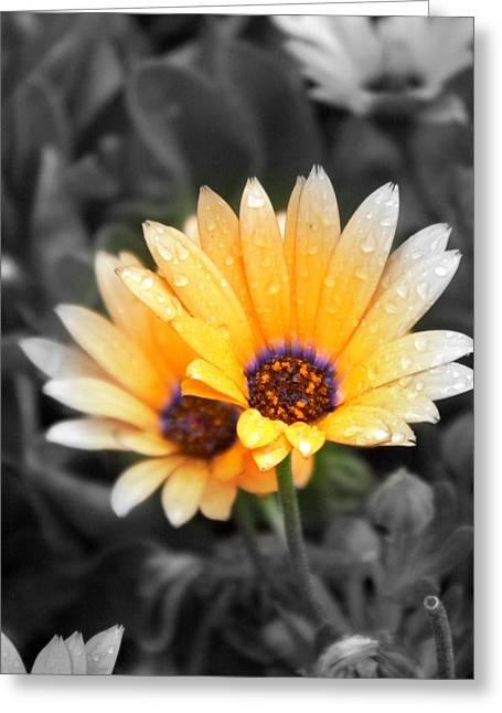Color My Petals Greeting Card by Amanda Eberly-Kudamik