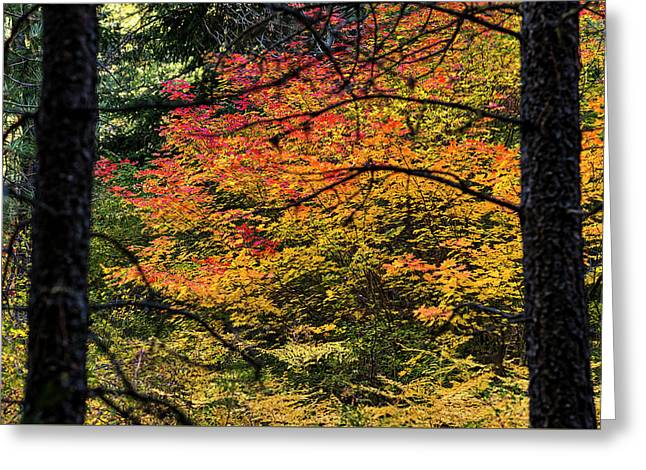 Cascade Mountain Range Fall Color Greeting Card