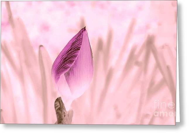Color Trend Flower Bud Greeting Card