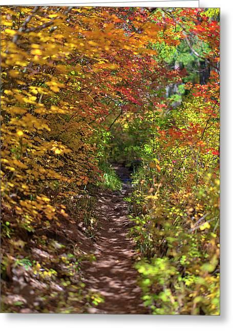 Cascade Mountain Range Color Vortex Greeting Card