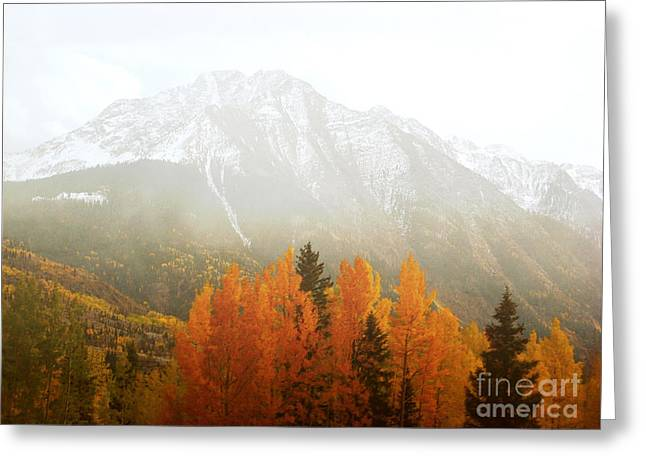 Colorado Aspen Trees Mountain Dreamy Landscape Greeting Card by Andrea Hazel Ihlefeld