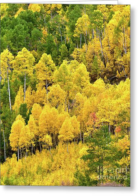 Colorado Colors Greeting Card by Jim Chamberlain