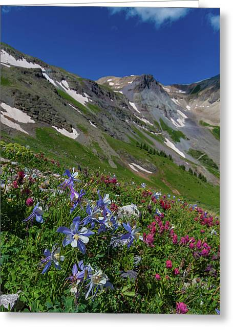 Colorado Columbine Adorn The Upper Edges Of The San Juan Mountai Greeting Card