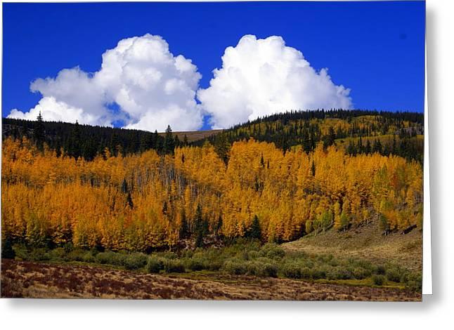 Colorado Fall 2 Greeting Card by Marty Koch
