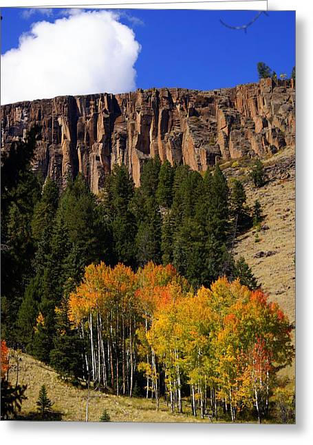 Marty Koch Greeting Cards - Colorado Fall 4 Greeting Card by Marty Koch