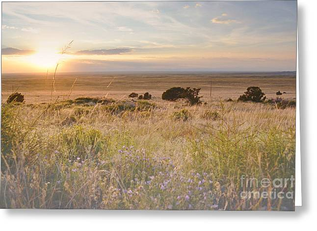 Colorado Field Sunset Landscape Greeting Card by Andrea Hazel Ihlefeld