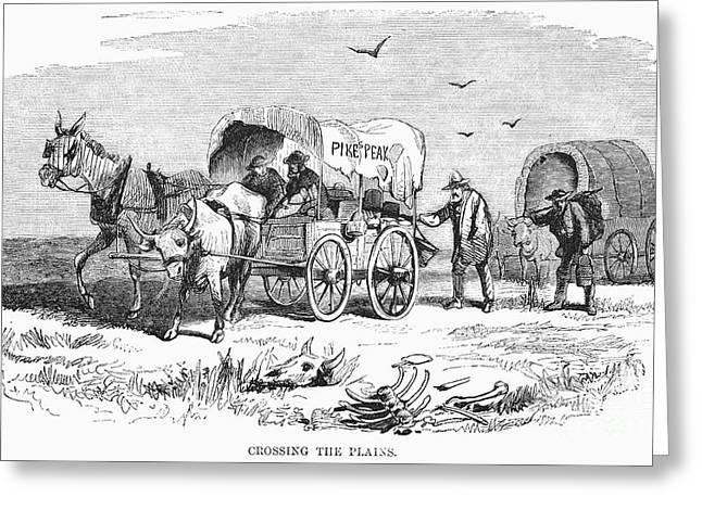 Colorado Gold Rush, 1859 Greeting Card