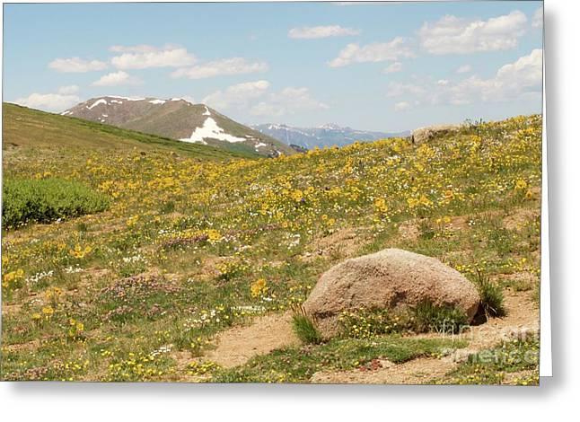 Colorado Independence Pass Greeting Card by Christine Belt