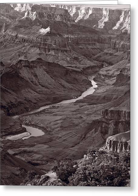Colorado River At Desert View Grand Canyon Greeting Card