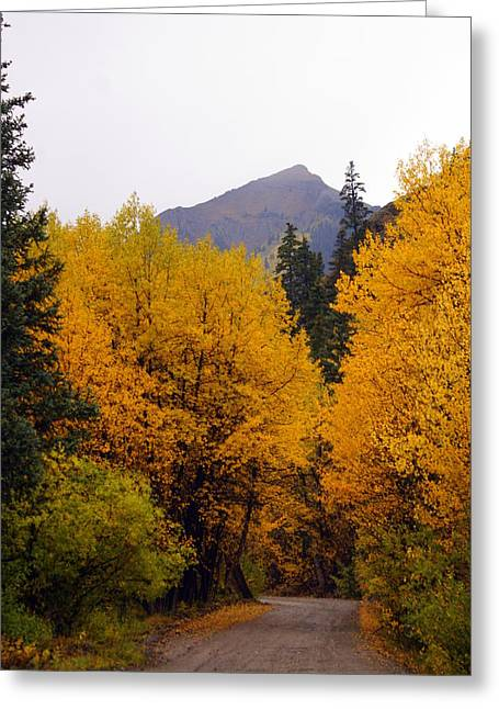 Colorado Road Greeting Card by Marty Koch