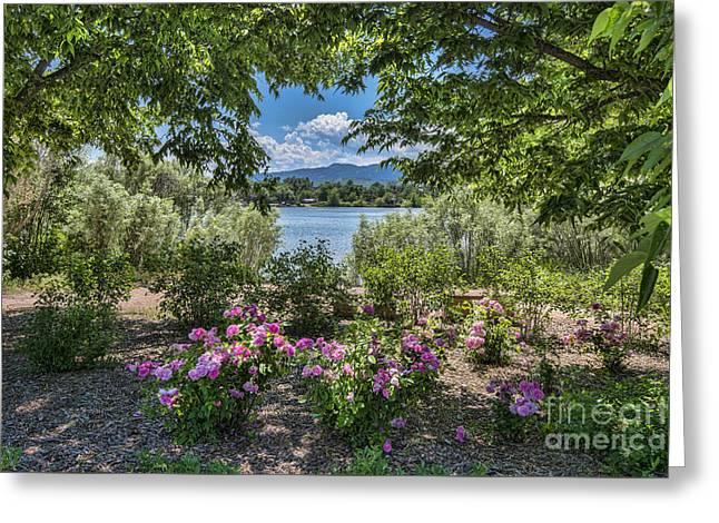 Colorado Rose Garden Greeting Card by Keith Ducker