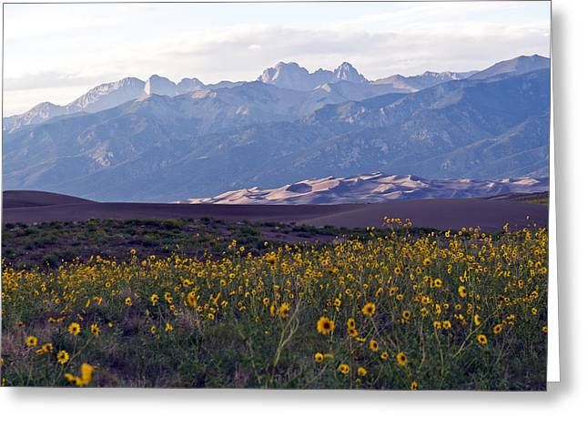 Colorado Style Landscape Sunflowers On The Sangre De Cristos Greeting Card