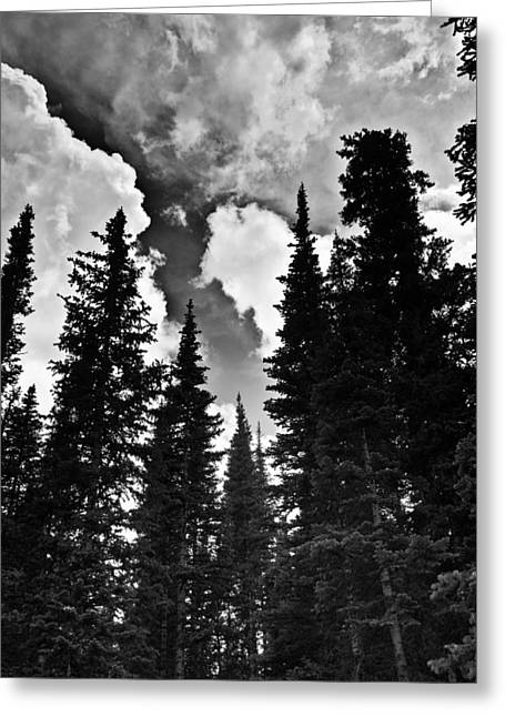 Colorado Trees Greeting Card by Patrick  Flynn