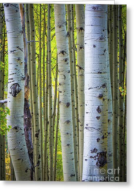 Colorado Trunks Greeting Card by Inge Johnsson