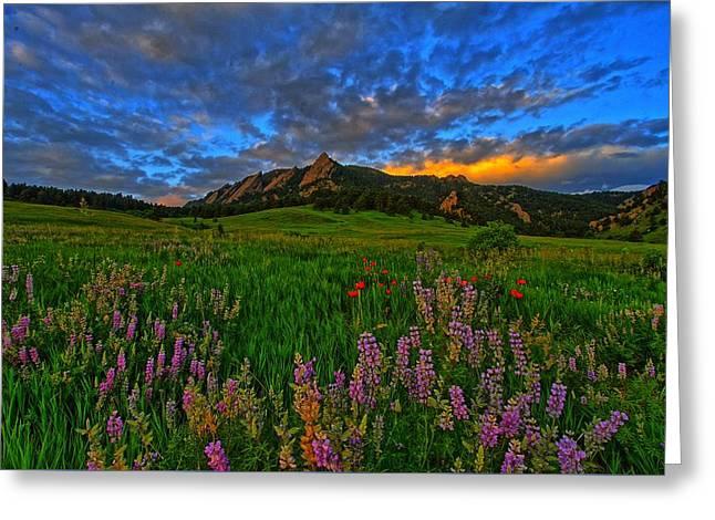 Colorado Wildflower Sunrise Greeting Card